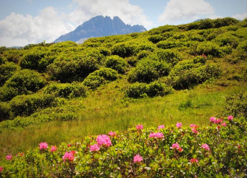 Almrosen erleben bei der Bergblumen-Märchenwanderung