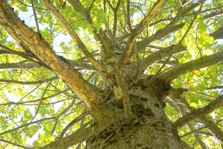 Baum erleben